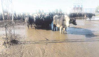 Tamberos piden medidas urgentes