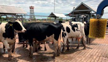 Producir leche con buenas prácticas: se presentó la guía que elaboraron más de 30 profesionales del sector