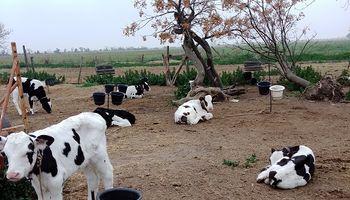 Tambo: la respuesta oficial frente a la frustración de la productora lechera