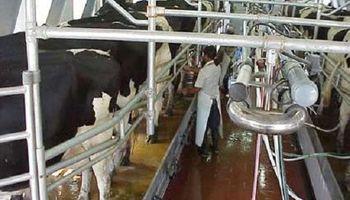 El sector lechero pierde oportunidades