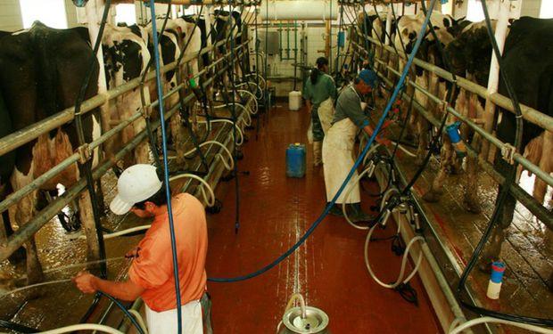 El precio de la leche al productor es el más bajo del mercado global y en un año cayó un 13 %