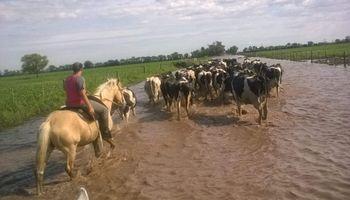 Emergencia lechera: este año seguirá cayendo la producción