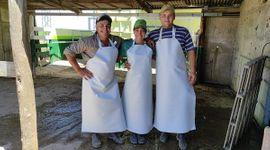 Reconversión del tambo chico: una familia que decidió repensar su negocio lechero