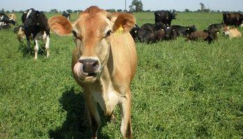 Rodeos cruza: una alternativa para el día que se pague por la calidad de la leche