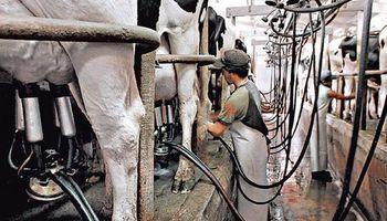 ¿Cómo obtener buena calidad de leche en los tambos?