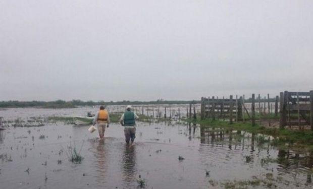 El alto nivel de las napas y el escurrimiento de las aguas, en la búsqueda de su cuenca natural, ha paralizado las tareas rurales.