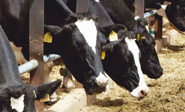 ¿Un proyecto lechero consensuado?