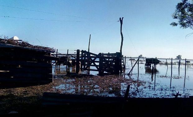 Santa Fe: en San Antonio, una explotación cerró hace algunos días.