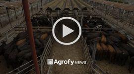 Liniers: mejoras en el precio de la vaca