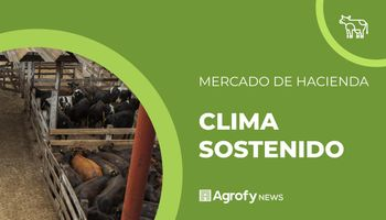 Liniers: clima sostenido para la vaca en la previa a los anuncios del Gobierno