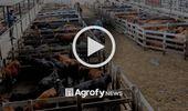 Liniers: la vaca cerró con subas de hasta cinco pesos