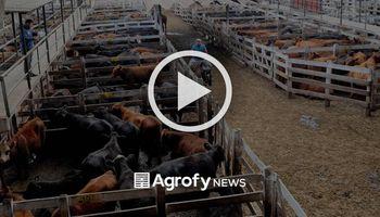 Liniers: subas en lotes de vacas