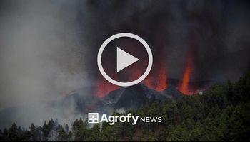 Volcán La Palma: así rescatan a los animales a punto de morir por la lava