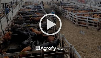 Liniers: cómo impactaron los anuncios en el precio de la vaca