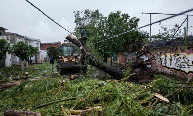 Un grupo de arboles dañaron el tendido de cables. Foto:  LA NACION  / Fernando Massobrio