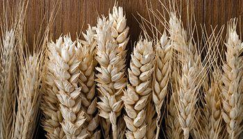 Mínimo de un mes para el trigo en Chicago: leves bajas para los precios de la campaña 2020/21
