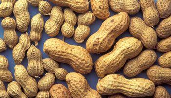 Soluciones eficientes para el cultivo de maní