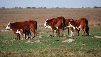 Aumentar 5 % el índice de destete para duplicar la exportación de carne