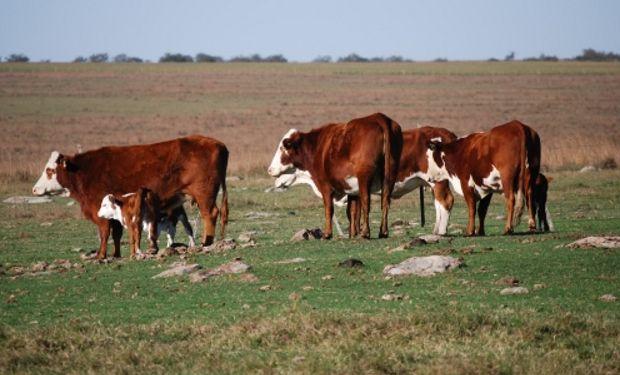 El Ministerio de Agroindustria de la Nación, junto con el INTA y Senasa, lanzó una campaña público-privada dirigida a productores de todo el país.