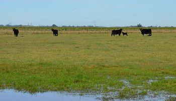 Cuidar al rodeo en época de excesos hídricos