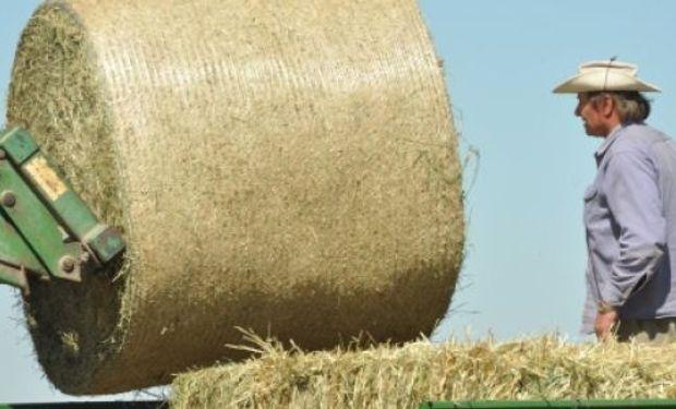 En el 2.° Congreso Mundial de Alfalfa brindarán pautas de adecuación del producto para la demanda internacional.
