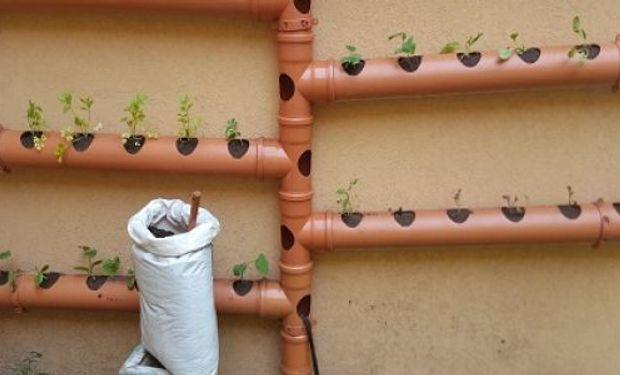 Cinco prácticas recomendadas por técnicos del INTA, claves para producir hortalizas sanas y frescas todo el año.