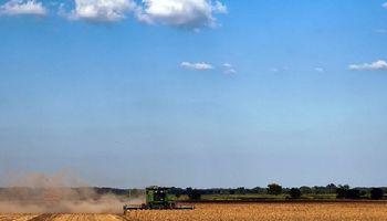 Sigue el tiempo ideal para cosechar