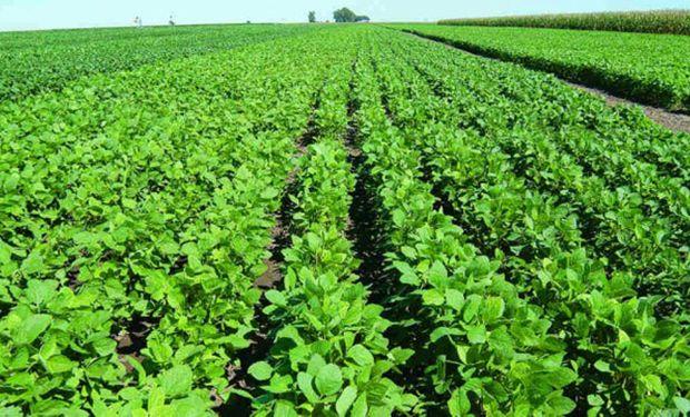 Licitan otras 1500 hectáreas de tierras de FF.AA.