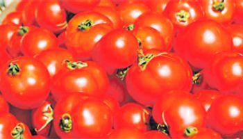 Sugieren reducir consumo de tomate, subirán los precios