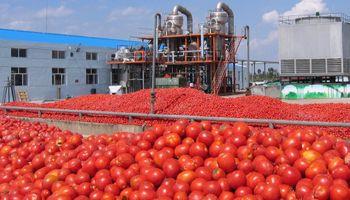 """Lanzan un bono social por $ 220 para ahorrar en """"tomate futuro"""""""
