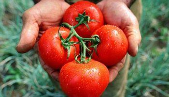 Identifican un nuevo virus que afecta al tomate