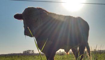 El Bienestar animal y las buenas prácticas en el Congreso Ganadero 2019
