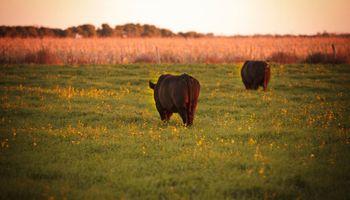 Testeo gratis y reposición de toros: los principales ejes del plan de prevención de enfermedades bonaerense