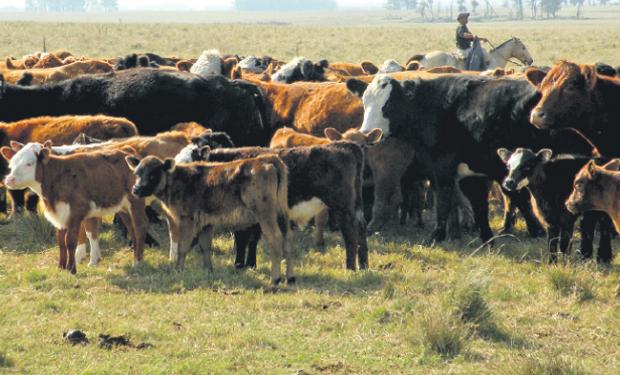 Uruguay tiene oportunidades en el mundo de la carne y precisa elevar faena. Foto: P.Mestre.