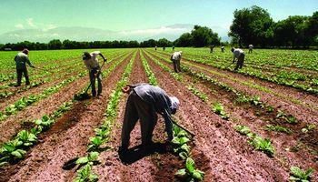 En Salta y otras provincias detectan irregularidades en trabajadores rurales