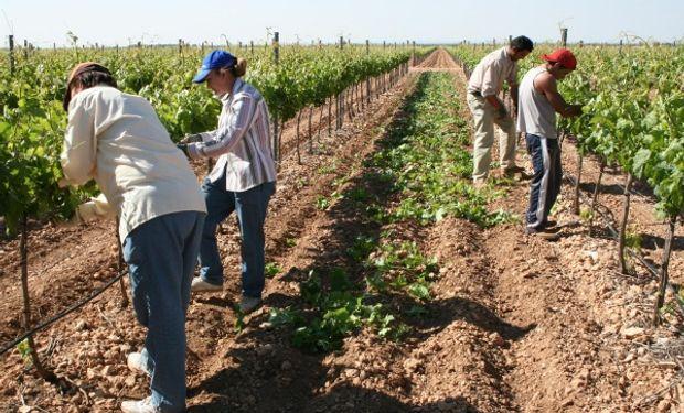 Desde Arizmendi señalan que son de aplicación al trabajador agrario las licencias previstas por la Ley de Contrato de Trabajo.