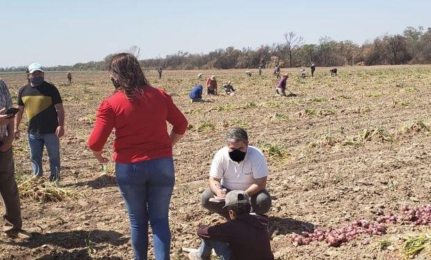 Detectaron 15 niños levantando cebolla en Santiago del Estero durante una fiscalización contra el trabajo infantil