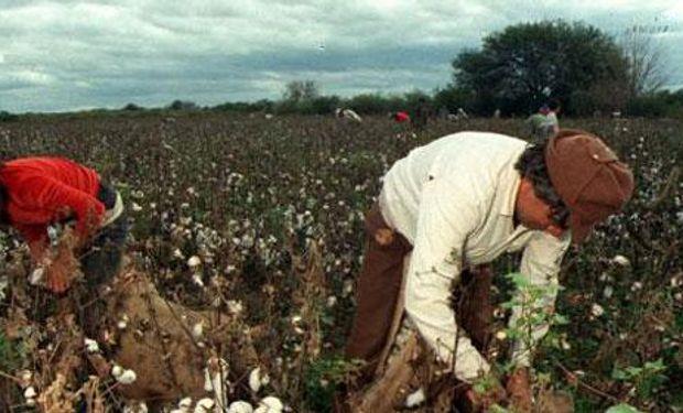 Agricultura asistirá a productores de Jujuy por la emergencia agropecuaria