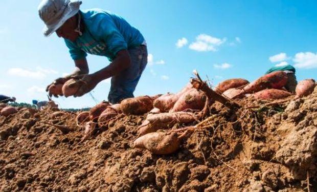 Todo sobre el trabajador rural y examen preocupacional.