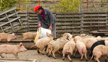 Campo: 31 cadenas agroalimentarias generan más de 2 millones de puestos de trabajo