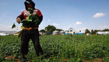 Contexto histórico en que fue sancionado el Régimen Nacional de Trabajo Agrario