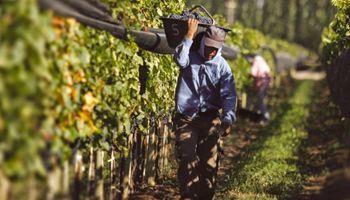 Régimen de Trabajo Agrario: derechos de los adolescentes