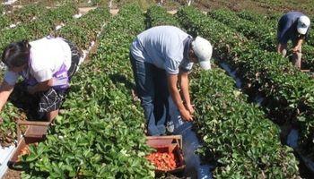Trabajo de menores en la actividad rural: jornada de trabajo y tareas prohibidas
