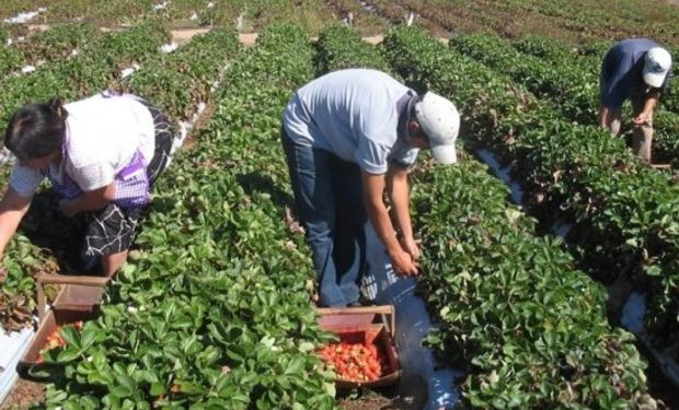Pautas para el trabajo de menores en la actividad rural.