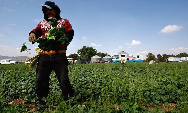 Un repaso por el Régimen Nacional de Trabajo Agrario.