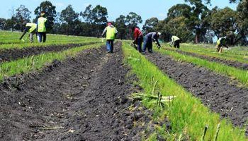 Régimen agrario: todo sobre jornada máxima legal, horas extras y recargos