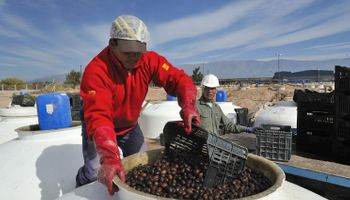 La Rioja busca potenciar su cluster olivícola