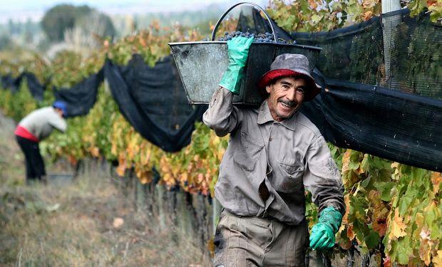 Peón rural: cómo acceder a la prestación de desempleo de hasta $11.000