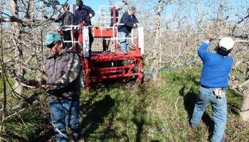 Falta mano de obra en la fruticultura, un sector que ocupa más de 50.000 trabajadores