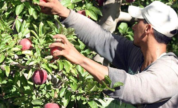 Aspectos previsionales del régimen del trabajo agrario.